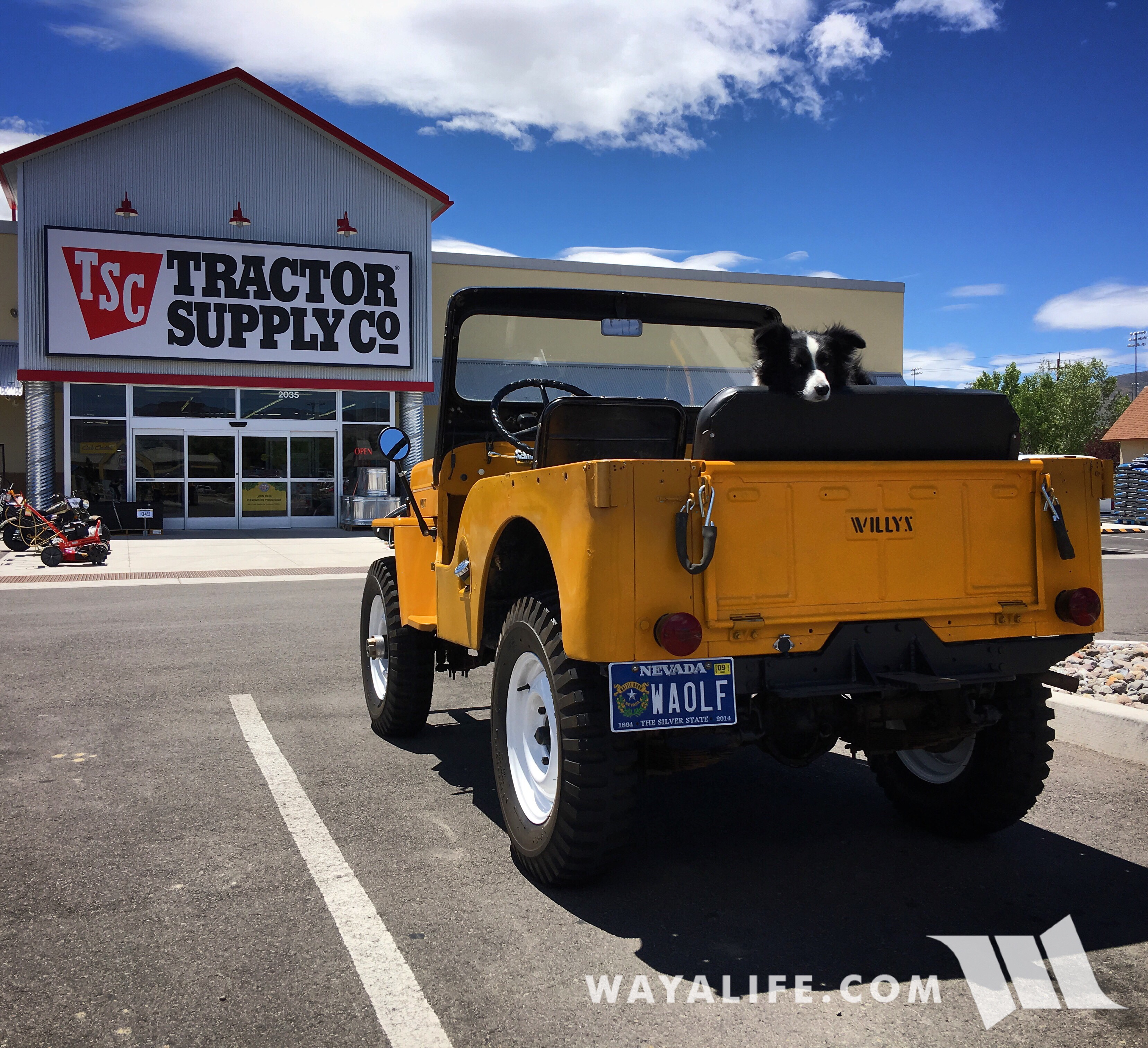 Pappy - Willys CJ3B at Tractor Supply